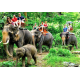 Half Day Tour 2 in 1 Elephant Trekking