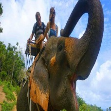 Elephant Trekking Package 1
